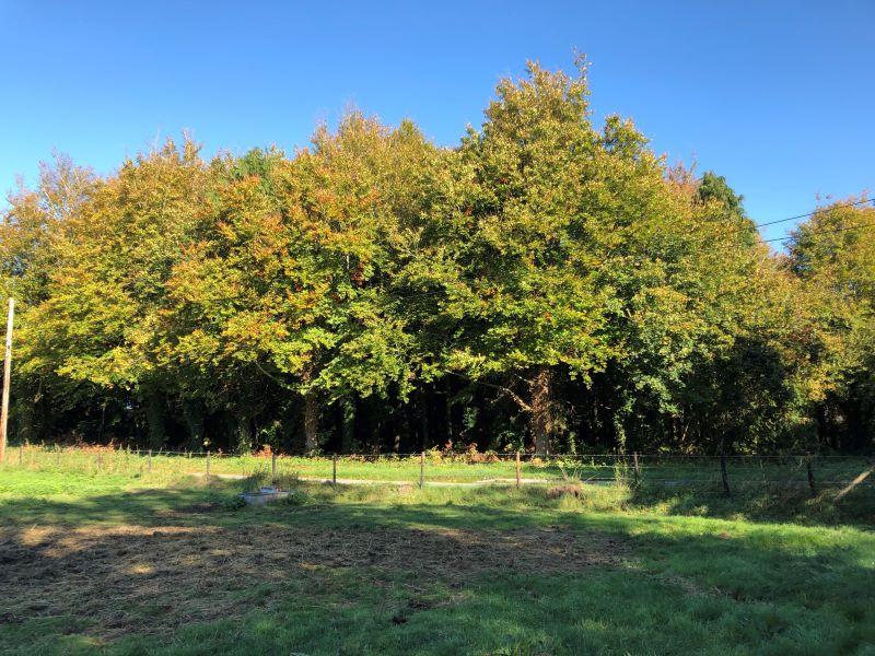 Woodland, Ablington, Figheldean, Salisbury, Wiltshire, SP48JX