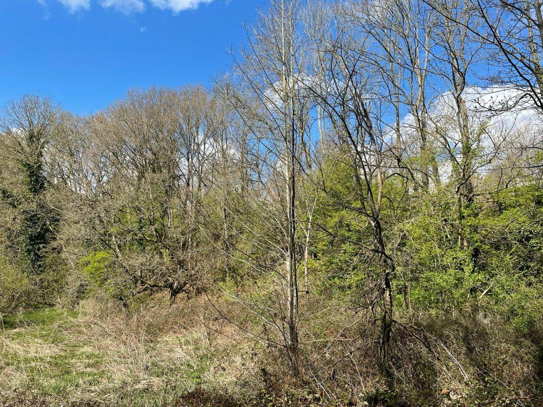 Land lying to the south west of Moor Park Lane, Farnham, GU101NR