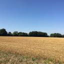 22.5 Acres (9.12 ha) of Land, Burston Road, Walcot Green, Diss, Norfolk