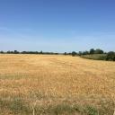 4.6 Acres (1.89 ha) of Land, Walcot Green, Diss, Norfolk