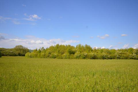 Barrington, Cambridge, Cambridgeshire, CB22